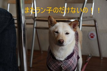 IMG_0111-1.JPG