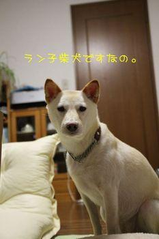 IMG_0064.JPG