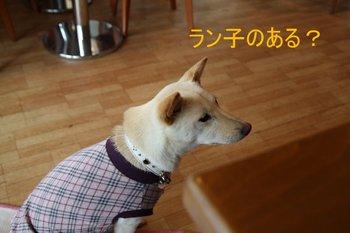 IMG_0100-1.JPG